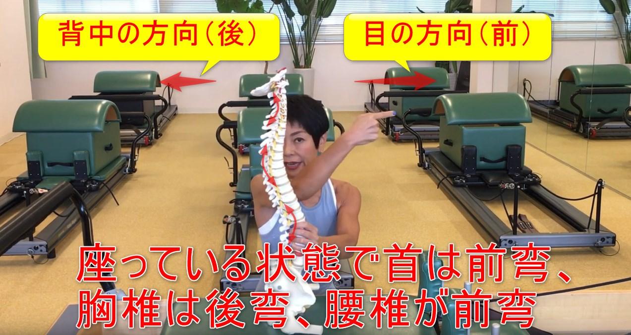 67-03_座っている状態で首は前弯、胸椎は後弯、腰椎が前弯