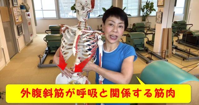 呼吸に関わる筋肉ってどこなの?肋骨からおへそにある外腹斜筋