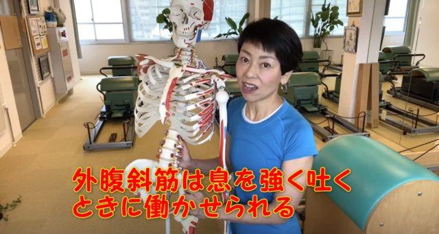 外腹斜筋はどうしたら鍛えられるの?息を強く吐くときに働く筋肉