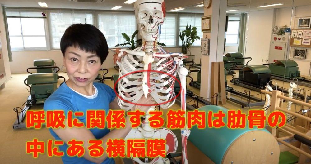 呼吸に関係する筋肉はどこ?肋骨内部にある横隔膜