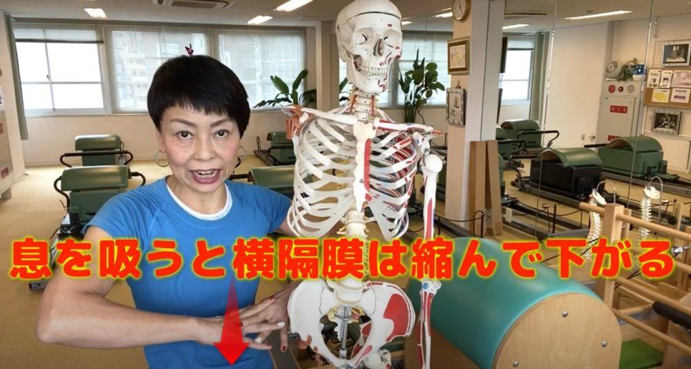 横隔膜はどんな役割があるの?息をすることで収縮と弛緩する筋肉